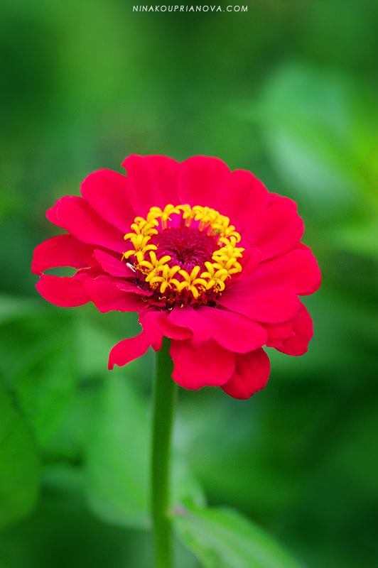 magenta flower 800 px url.jpg