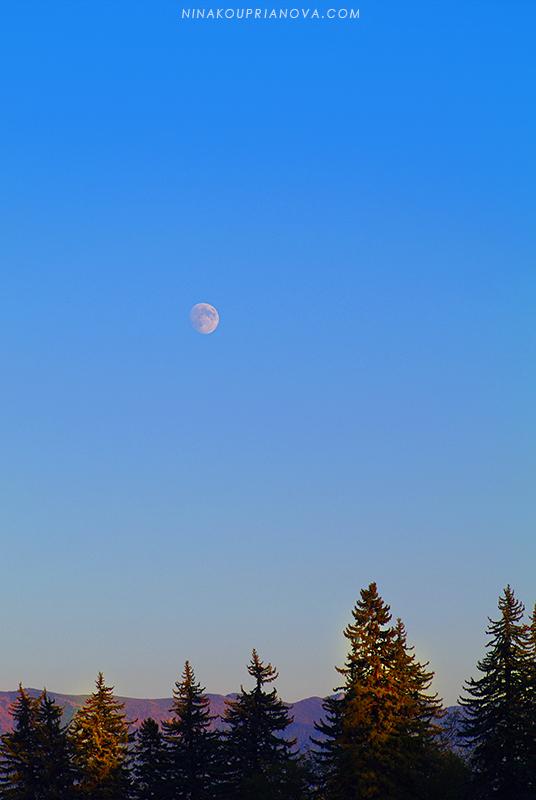 moon town view 800 px url.jpg