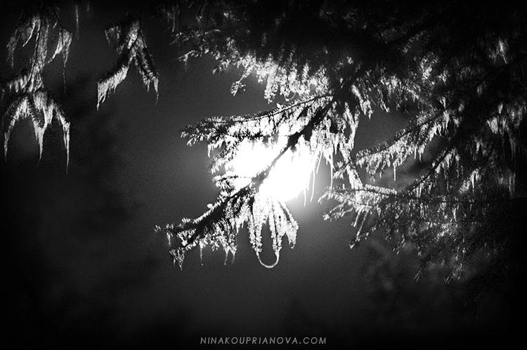 moon through the trees 2 750 px url.jpg