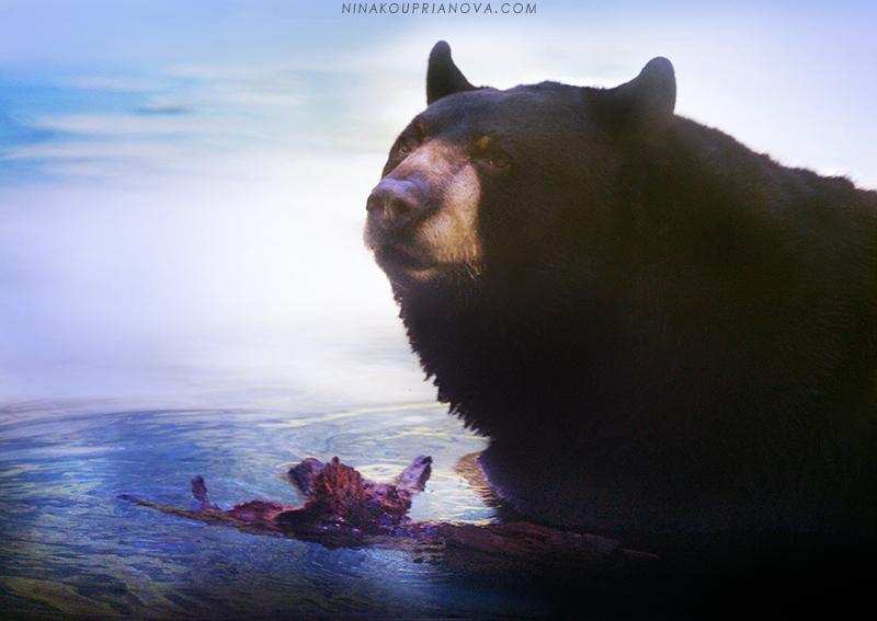 bear 1 800 px url.jpg