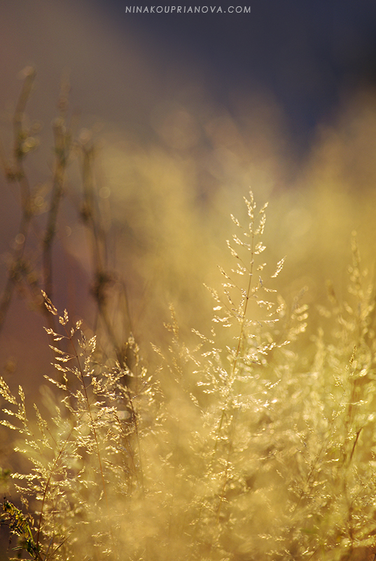 autumn golden hour 2 800 px url.jpg