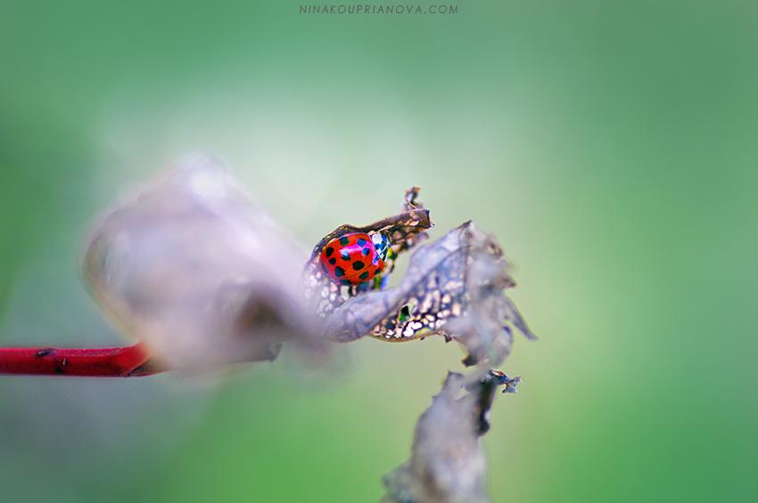 lef decay lady bug 850 px url.jpg