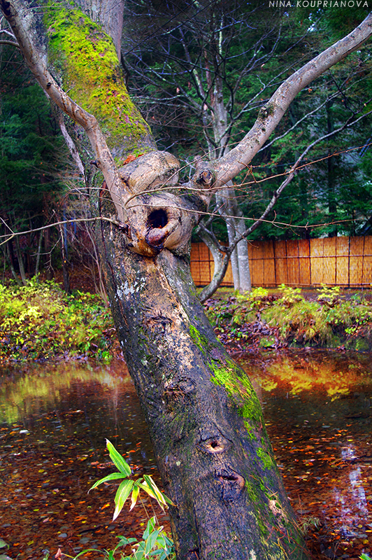 tree and water 800 px url.jpg