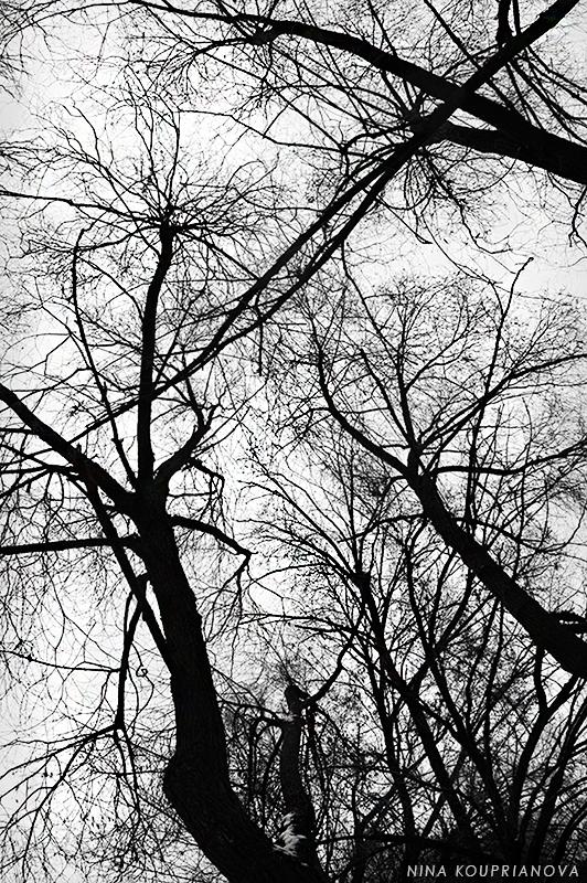 ents autumn 1 800 px url.jpg