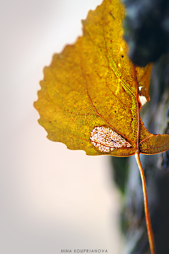 leaf decomposing 850 px url.jpg