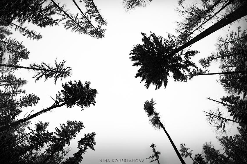 trees circle winter 850 px url.jpg