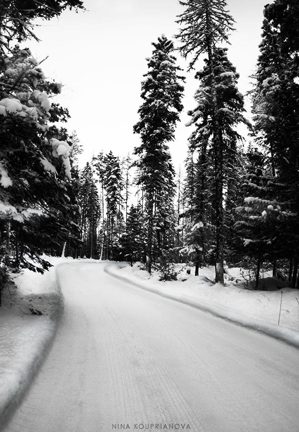 winter road dec v2 850 px url.jpg