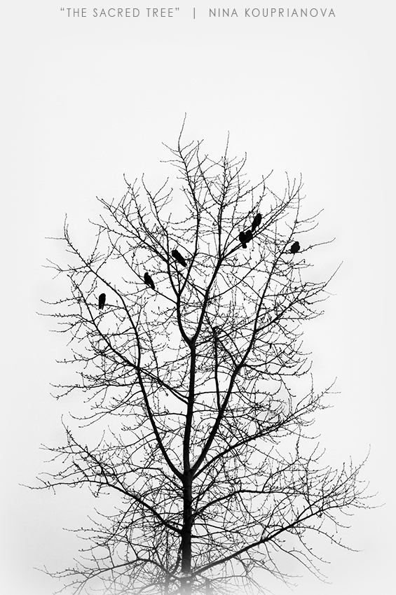bird tree 3 850 px url.jpg
