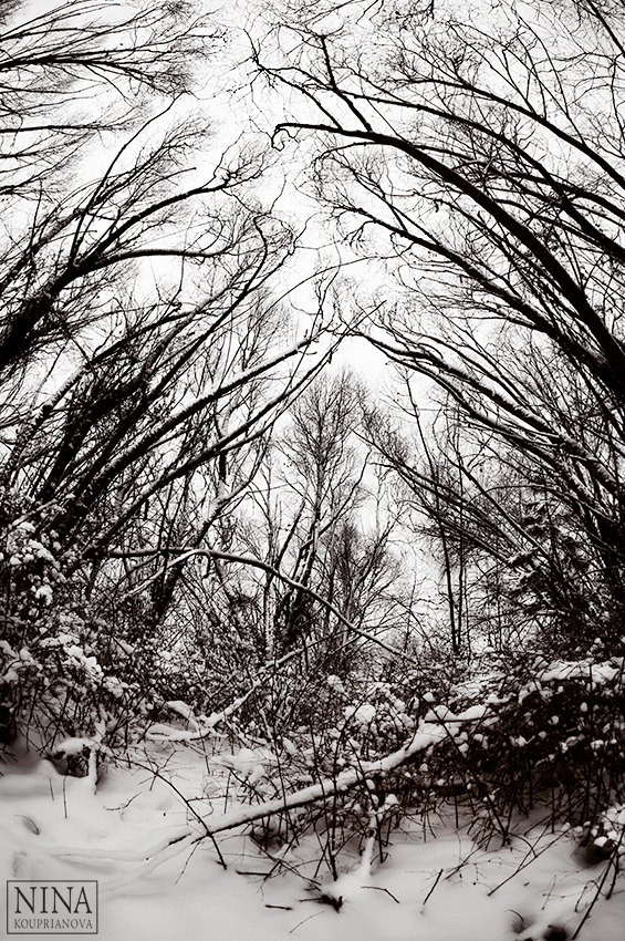 trees reaching snow 1 duo 850 px url.jpg