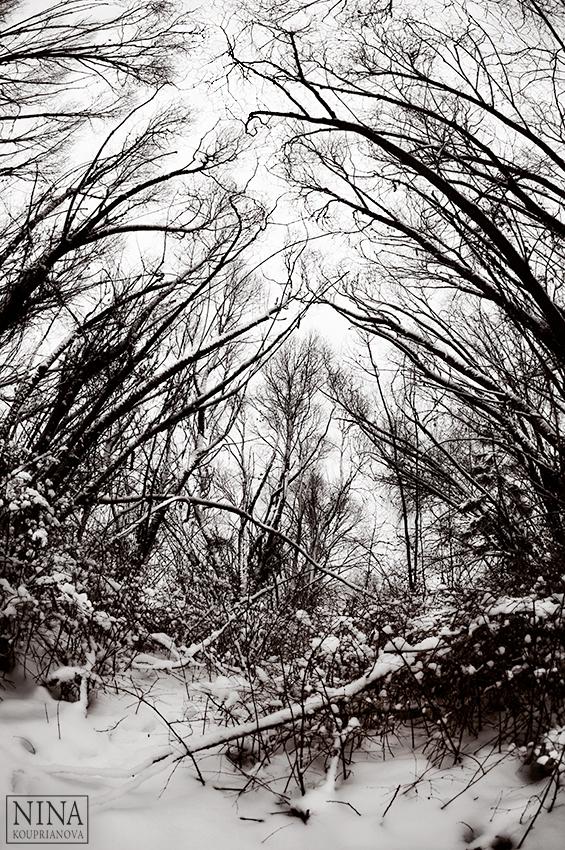 trees reaching snow 1 duo 850 px url.jpg