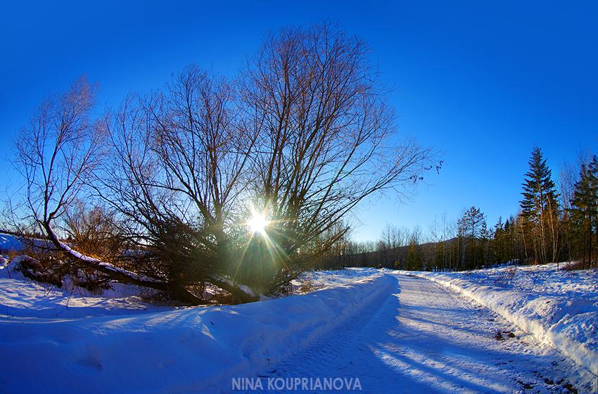 cold walk 1 850 px url.jpg