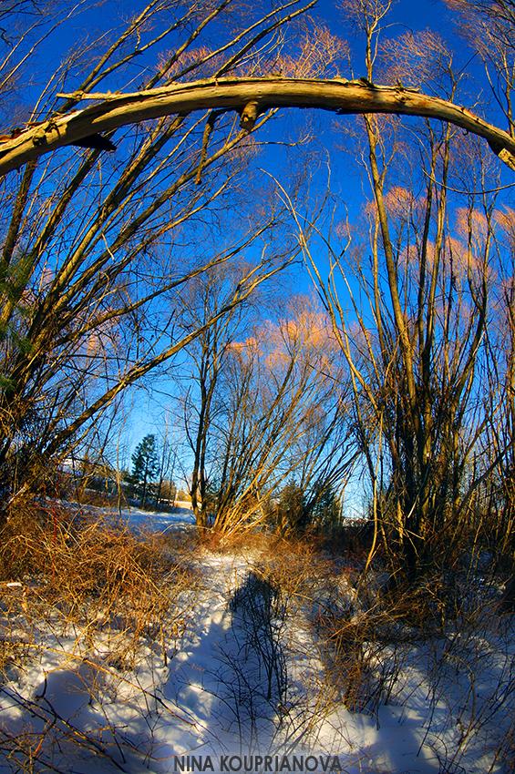 cold walk 3 850 px url.jpg