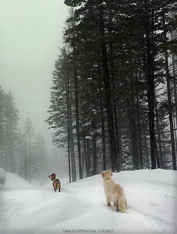 roediger snow fog 800 px url.jpg