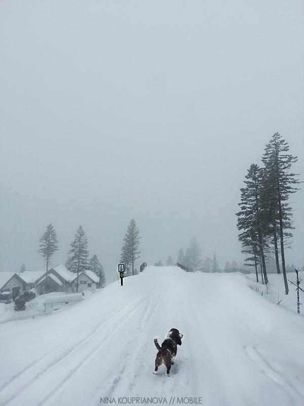 snow fog feb 1 800 px url.jpg