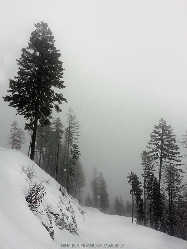 snow fog feb 6 800 px url.jpg