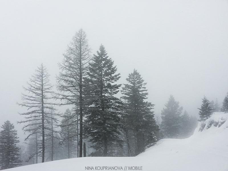 snow fog feb 7 800 px url.jpg