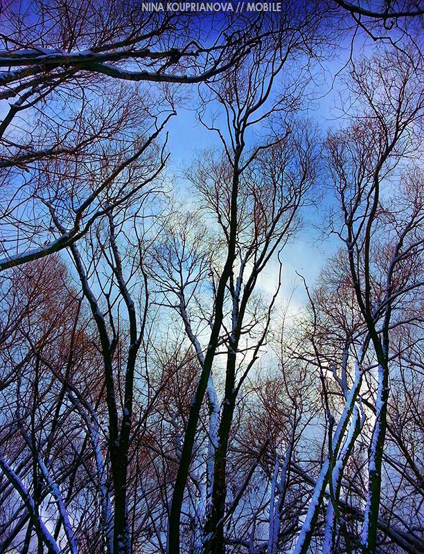 trees on blue 800 px url.jpg