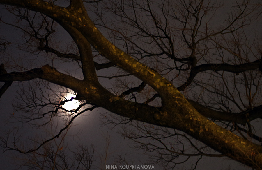 tokyo moon trees 2 900 px url.jpg