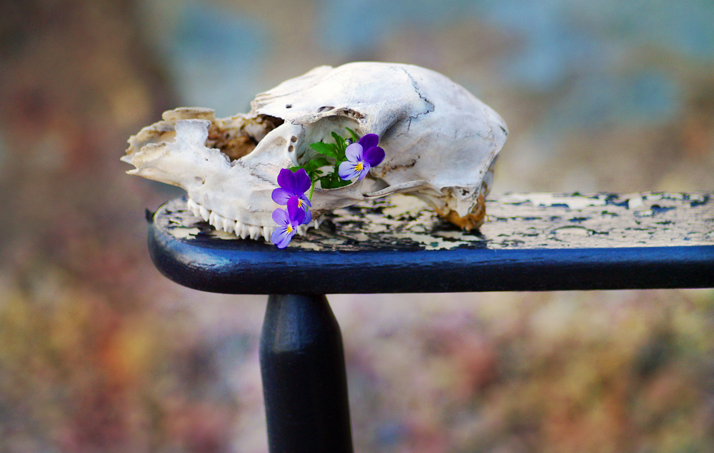 skull on chair background 2200 px.jpg