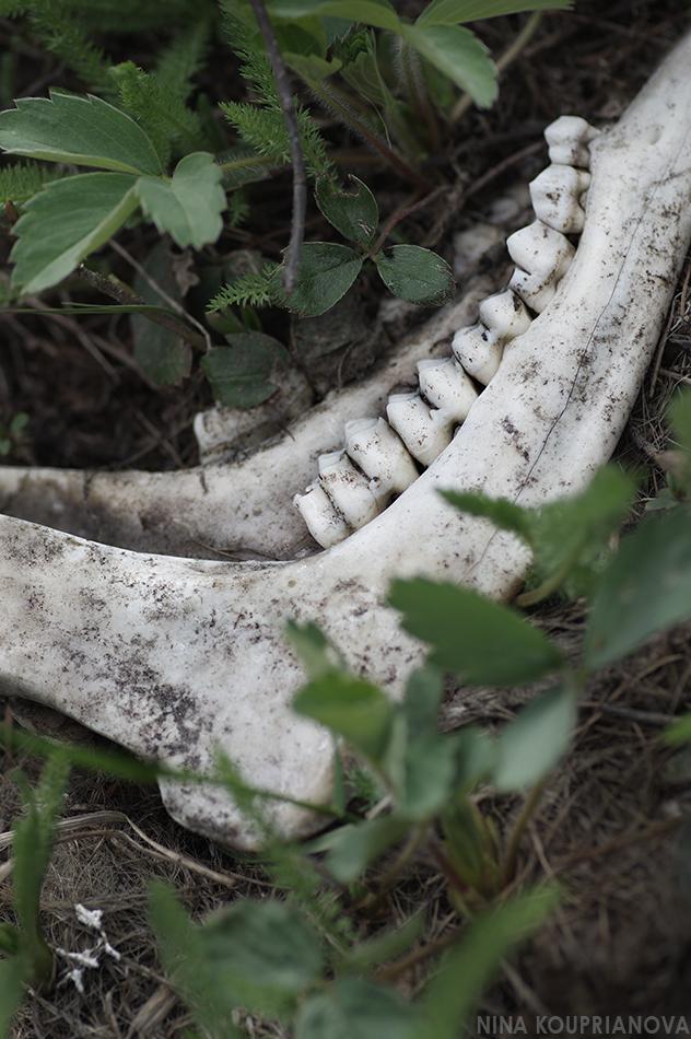 jaw bone 950 px url.jpg