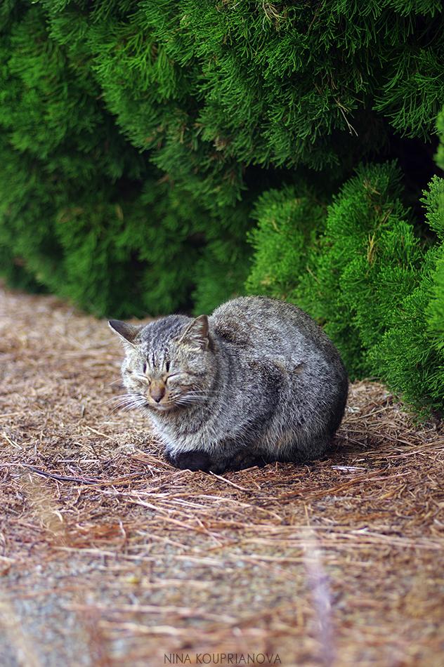 japanese cats 1 950 px url.jpg