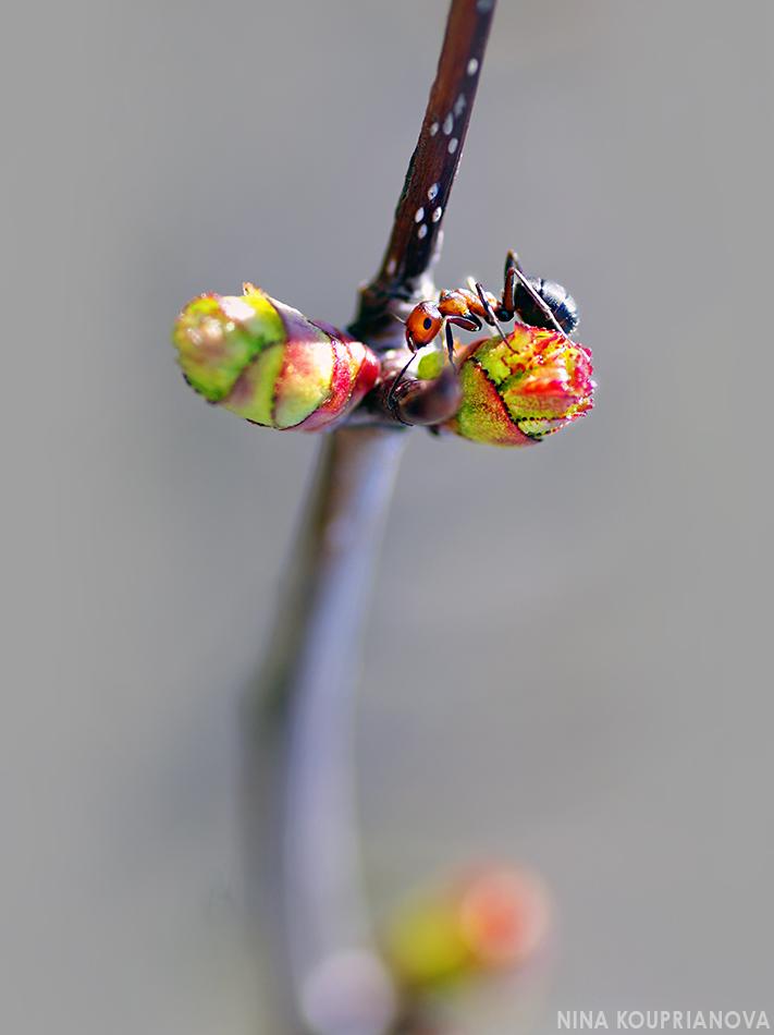 ant on plant 950 px url.jpg