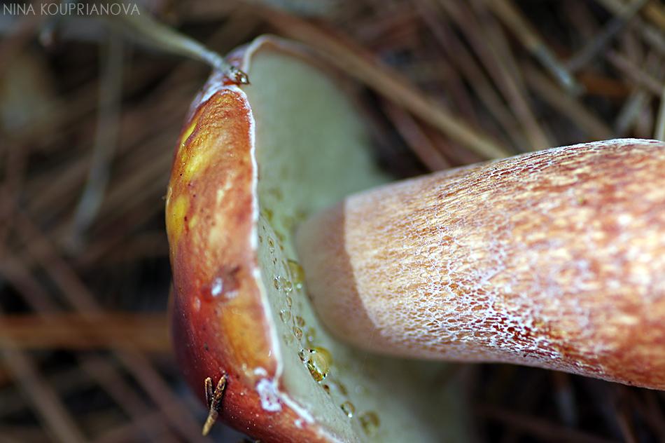 mushroom closeup 950 px url.jpg