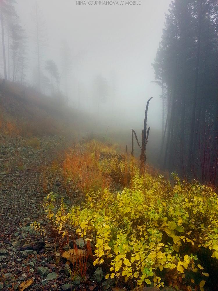 fog oct 1 1000 px.jpg