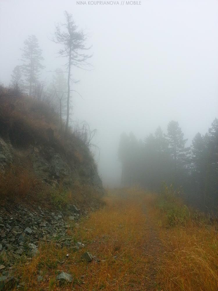 fog oct 3 1000 px.jpg