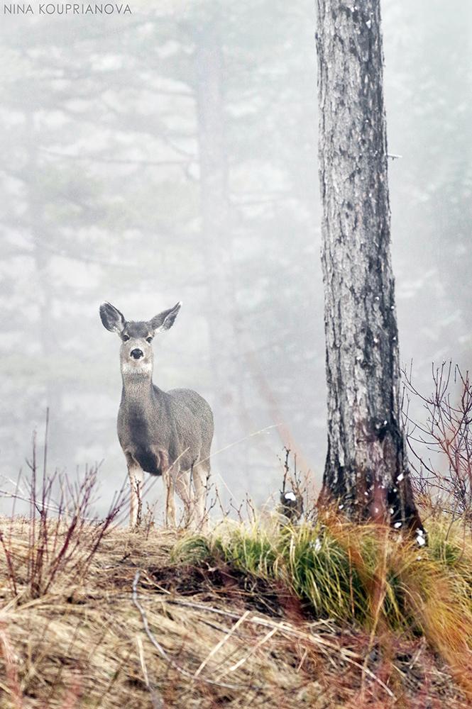 deer in fog v2 url 1000 px.jpg