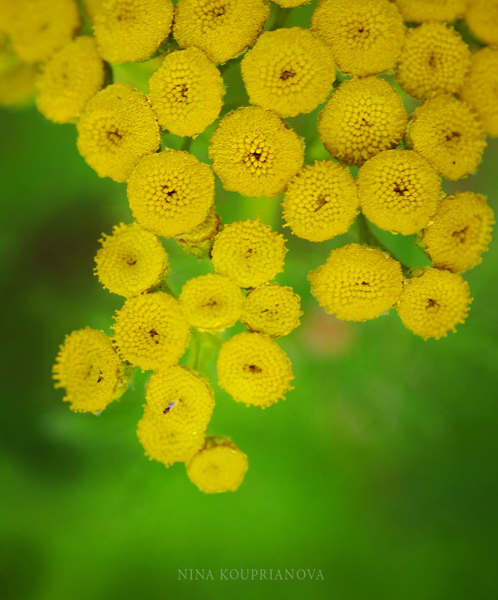 yellow and green sq 1500 px.jpg