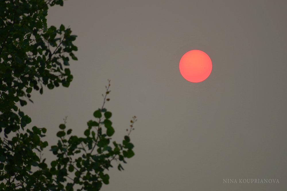 sun forest fires 2017 2000 px.jpg