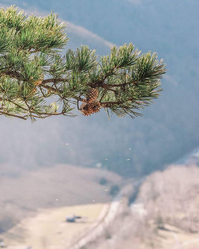 Invisible life on the top... The photo is taken on Seneca Rocks, West Virginia. ~ Невидимое. Фото сделано на вершине горы Seneca Rocks, штат Вирджиния.