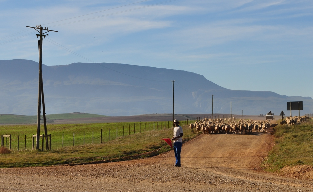 Look behind you! Farming in the Overberg