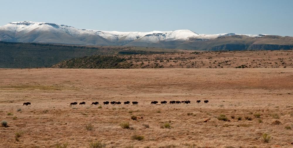 Samara Private Game Reserve in winter.