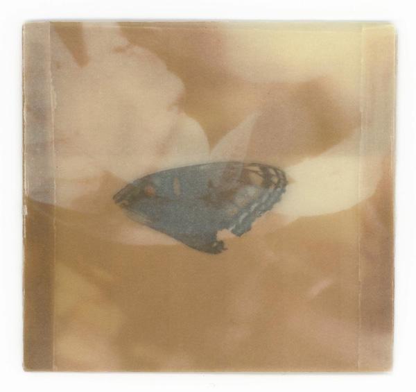 wing_1.jpg