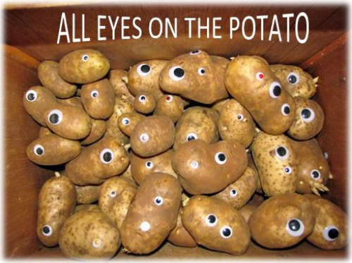 potato eyes.JPG