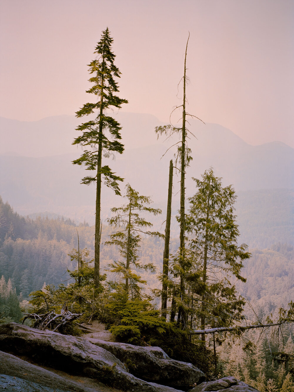 "Skykomish Valley, Washington (2018)   From the series ""August""   40 x 30"" / Edition of 5  20 x 15"" / Edition of 10  -"