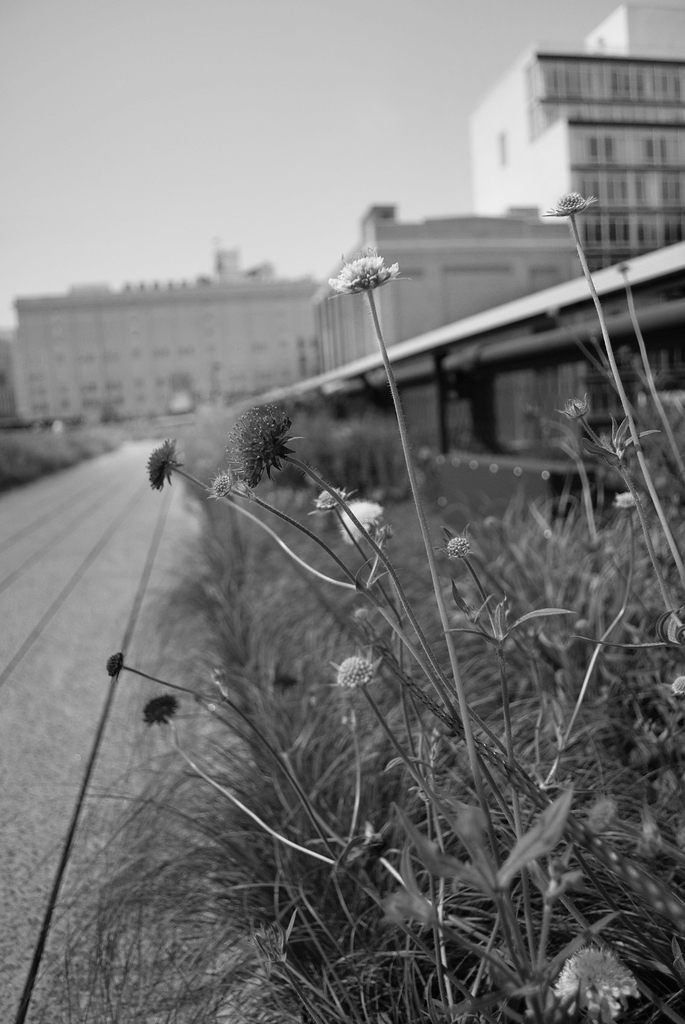 Highline_Manhattan_2011_8 new.jpg