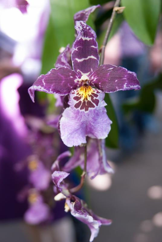 New-York-Botanical-Gardens-orchid-Show-97.jpg