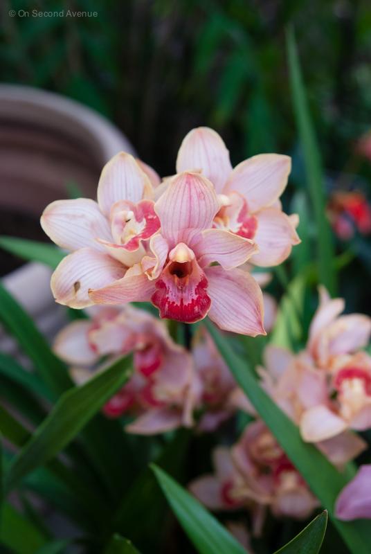 New-York-Botanical-Gardens-orchid-Show-475.jpg