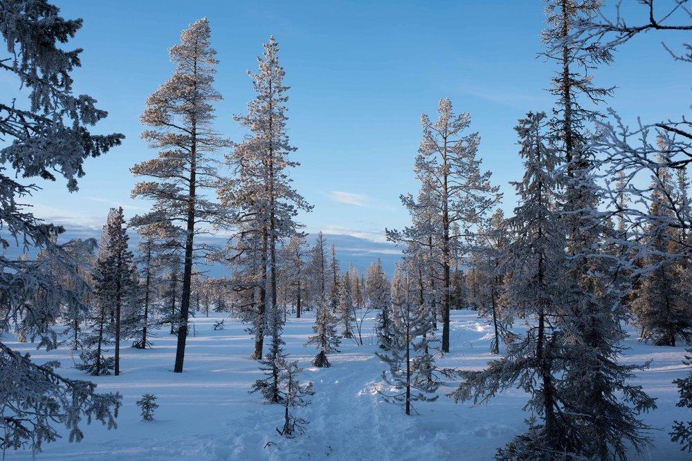 2017Feb11_Kiruna_844.jpg