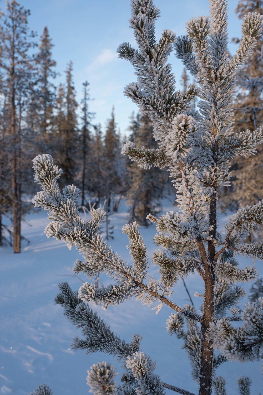 2017Feb11_Kiruna_855.jpg