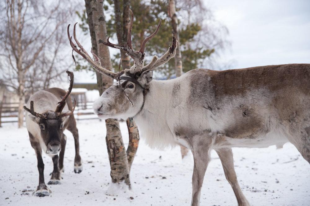 2017Feb12_Kiruna_284.jpg