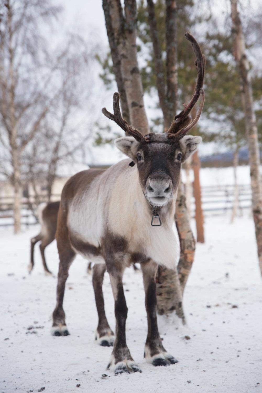2017Feb12_Kiruna_286.jpg
