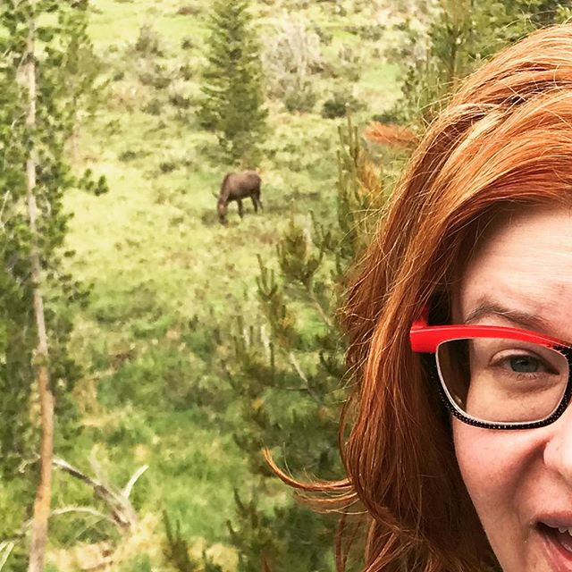 Proof for Charlie who's going to say I stole that other moose pic off the Internet.