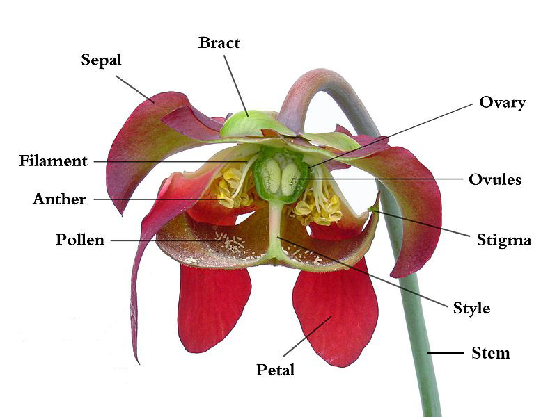 Anatomy of a Flower — Pier Press