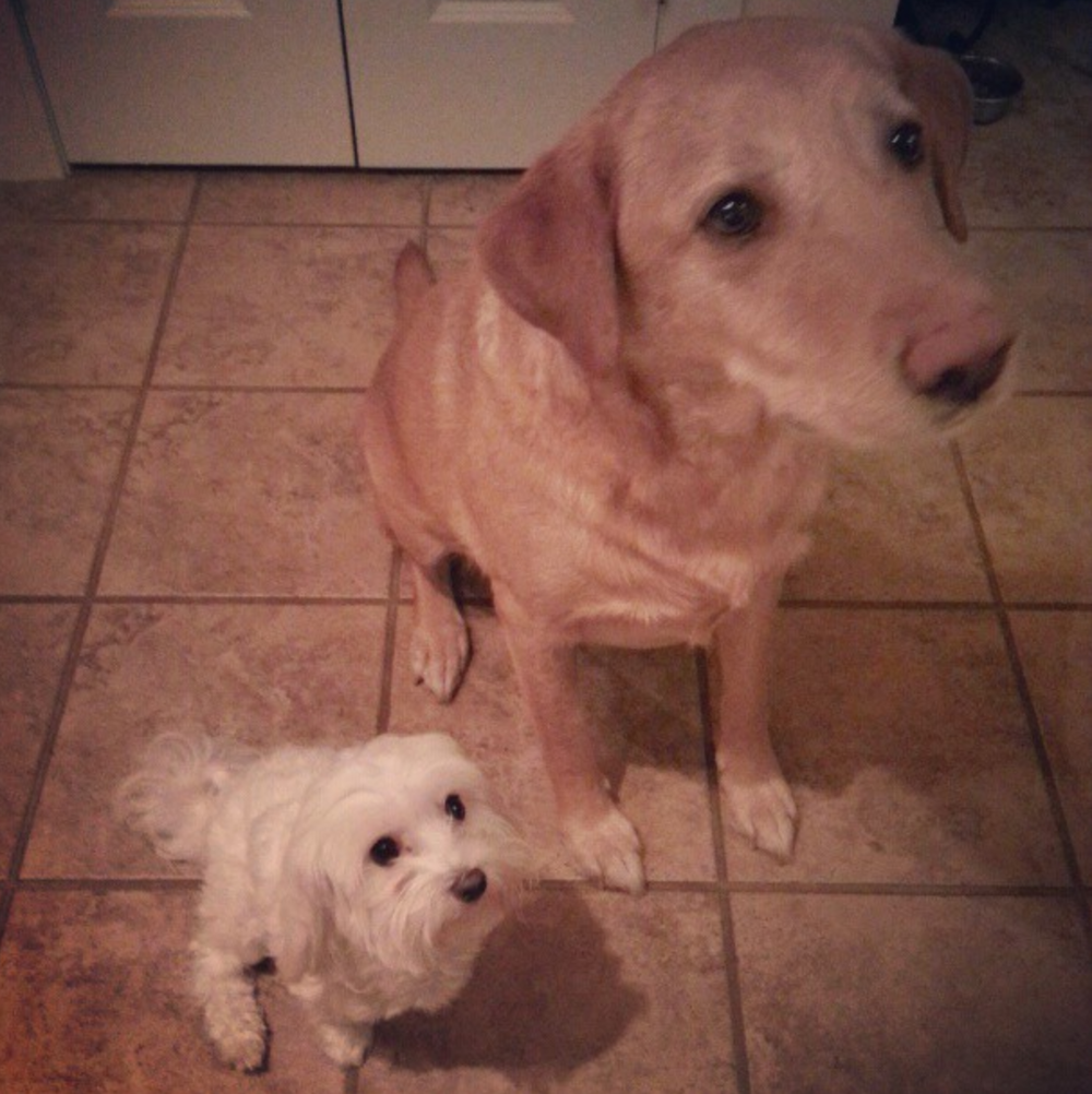My puppies, Isabella and Ruger