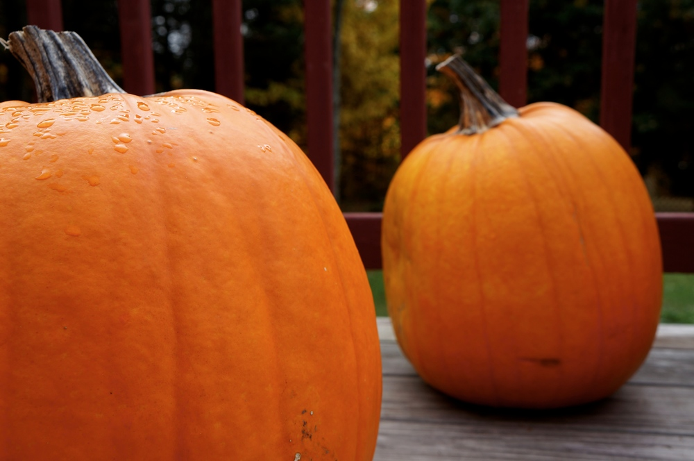 Find pumpkins as cheap as $4!