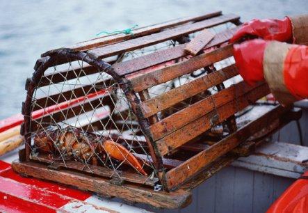 lobster_trap.jpg